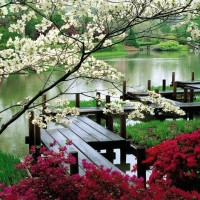 Japanese-Garden-Wallpaper-Nature-Wallpapers-8269-1920x1200PX-japanese-garden-wallpaper-desktop--740x530