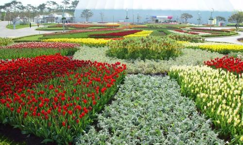 Goyang tarptautinis gėlių festivalis [www.gyotongn.com]