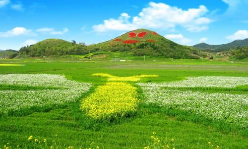 Hampyeong drugelių festivalis [www.mcst.go.kr]